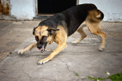 Памятка по предупреждению бешенства среди животных