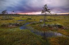 Безопасность на болоте