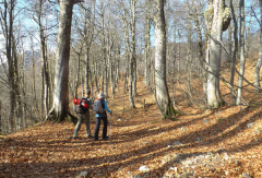 Что делать, чтобы не заблудиться в лесу